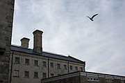 A bird flies past cell windows of one of the main wings at HMP/YOI Portland, a resettlement prison with a capacity for 530 prisoners. Dorset, United Kingdom.