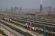 Children and adult workers the carry bricks at the JRB brick factory near Sonargaon, outside Dhaka, Bangladesh. The heavy clay soils along the river near the market town of Sonargaon are well suited for making bricks. At the JRB brick factory, workers of all ages move raw bricks from long, stacked rows, where they first dry in the sun, to the smoky coal-fired kilns. After being fired, the bricks turn red. A foreman keeps tally, handing the workers colored plastic tokens corresponding to the number of bricks they carry past him. They cash in the chips at the end of each shift, taking home the equivalent of $2 to $4 (USD) a day.