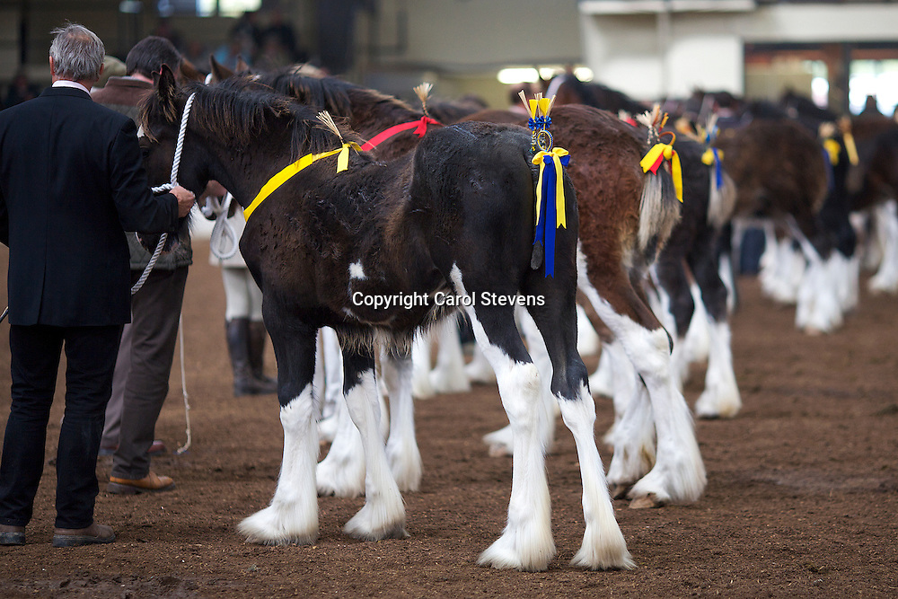 North West and Wales Shire Foal Society <br /> 33rd Annual Show and Sale<br /> 13 October 2012