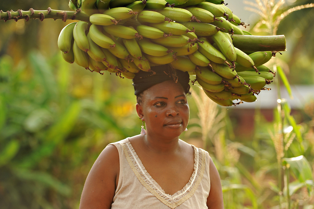 "KIROKA, TANZANIA -  13-11-02  - Fatima Salmaan Saleh carries a freshly harvested banana cluster on November 2.  An FAO project to strengthen capacity of farms for climate change is underway in Kiroka, Tanzania. ""It's something we may call climate-smart agriculture,"" says mission project co-ordinator Prof. Henry Mahoo, who teaches at the Sokoine University of Agriculture. The project aims to improve land and water management, promote climate resilient agriculture and encourage dialogue and understanding regarding climate change adaptation practices.   Photo by Daniel Hayduk"