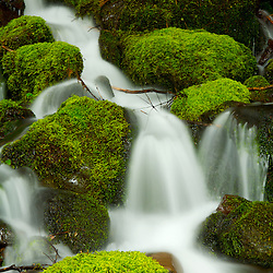 Cascades and moss-covered rocks in the Olympic National Forest near Lake Quinault, WA.