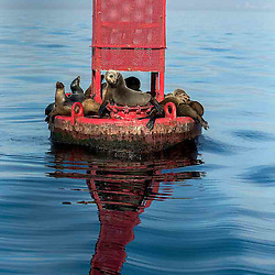 Seals, Marina Del Rey