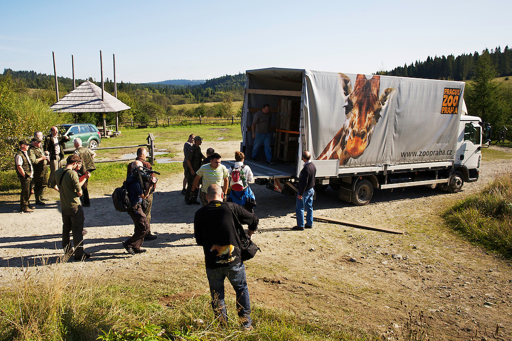 Staff of Bieszczady National Park and Prague Zoo watch unloading of two crates containing two European bison or Wisent (Bison bonasus) donated by Prague Zoo to  Bieszczady National Park. Bukowiec, Poland.