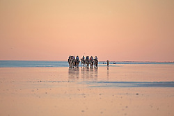 A camel train at last light north of the rocks on Broome's Cable Beach.  There are three camel operators currently conducting tours on Cable Beach, one of the world's most famous beaches.