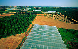 Aerial Image Citrus Orchard, Hot House Agriculture