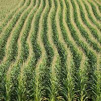 Heartland - Iowa Corn