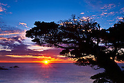 Cypress Tree (Cupressus macrocarpa) at sunset, Point Lobos State Reserve, Carmel, California USA