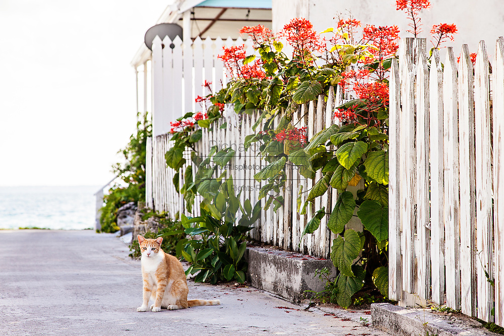 A cat sits along a path in New Plymouth on Green Turtle Cay, Bahamas.