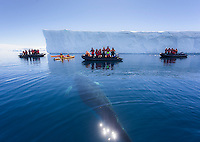 A young Minke Whale (Balaenoptera bonaerensis) investigates a group of whale watchers exploring Curtis Bay within the Antarctic Peninsula.  Antarctica.