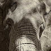 &ldquo;Aged Eyes&rdquo;                                                       Zimbabwe<br />