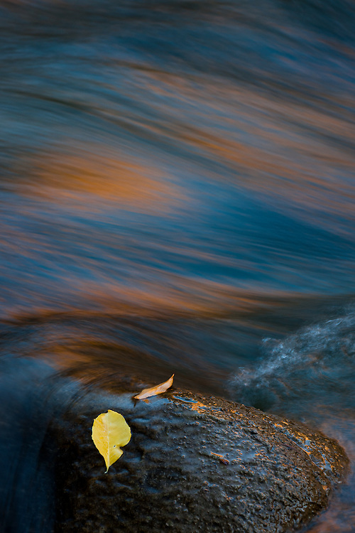Two leaves stand unmovable in a rock as the water from the Virgin River flows by, in Utah's Zion National Park