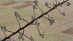 Desert plant Las Palmas Canary Islands