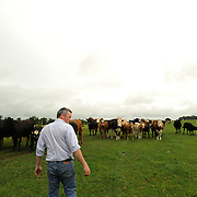 Farmer Enda Doran checks his cattle in one of his farming land in Ballinasloe, Co. Galway...Mr. Doran is the eldest of 3 brothers and sisters and by tradition the heritor of the family farming land and business. His farming activities involve cereal and potato production, cattle and sheep breathing and contract work for other farmers.