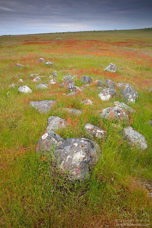 Summer wildflowers color the prairie around exposed rocks in the San Juan Island National Historical Park in Washington state.