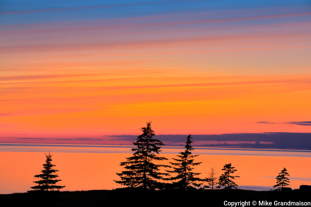 Trees silhouetted by the Gulf of St. Lawrence at dusk