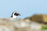 Bird Island, Algoa Bay, Eastern Cape, South Africa