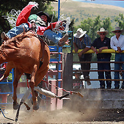 Brad Caley from Ashburton in action during the Open Bareback competition at the Millers Flat Rodeo. Otago, New Zealand. 26th December 2011