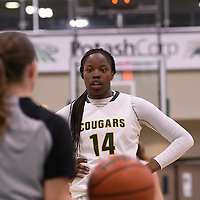 1st year post Angela Bongomin (14) of the Regina Cougars in action during the home opener  on November  4 at Centre for Kinesiology, Health and Sport. Credit: /Arthur Images