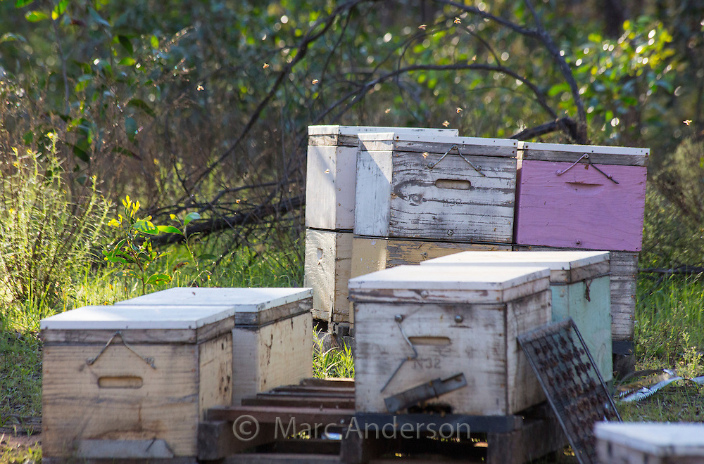 Beehive boxes in box-ironbark woodloand, Victoria, Australia