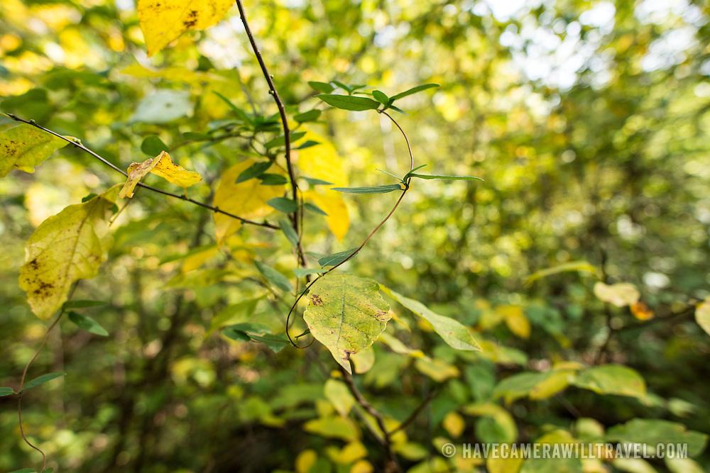 Fall trees on Theodore Roosevelt Island in Arlington, VA.