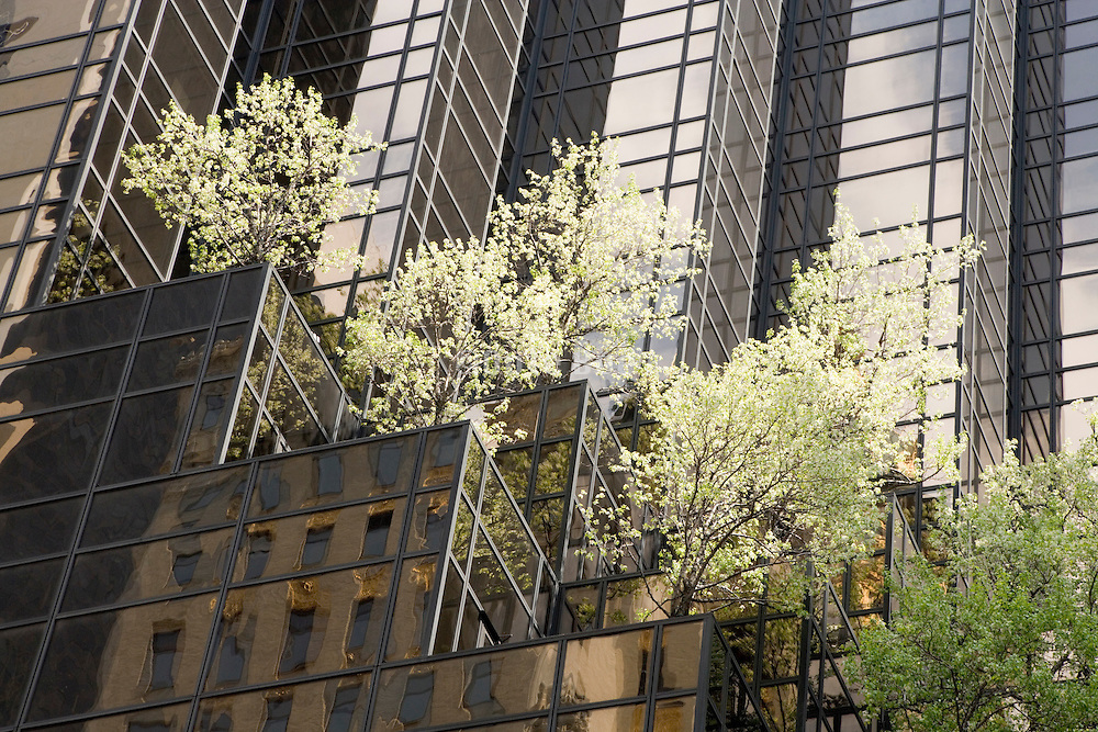 New York city high rise building with tress planted with in the facade Trump Tower fifth avenue