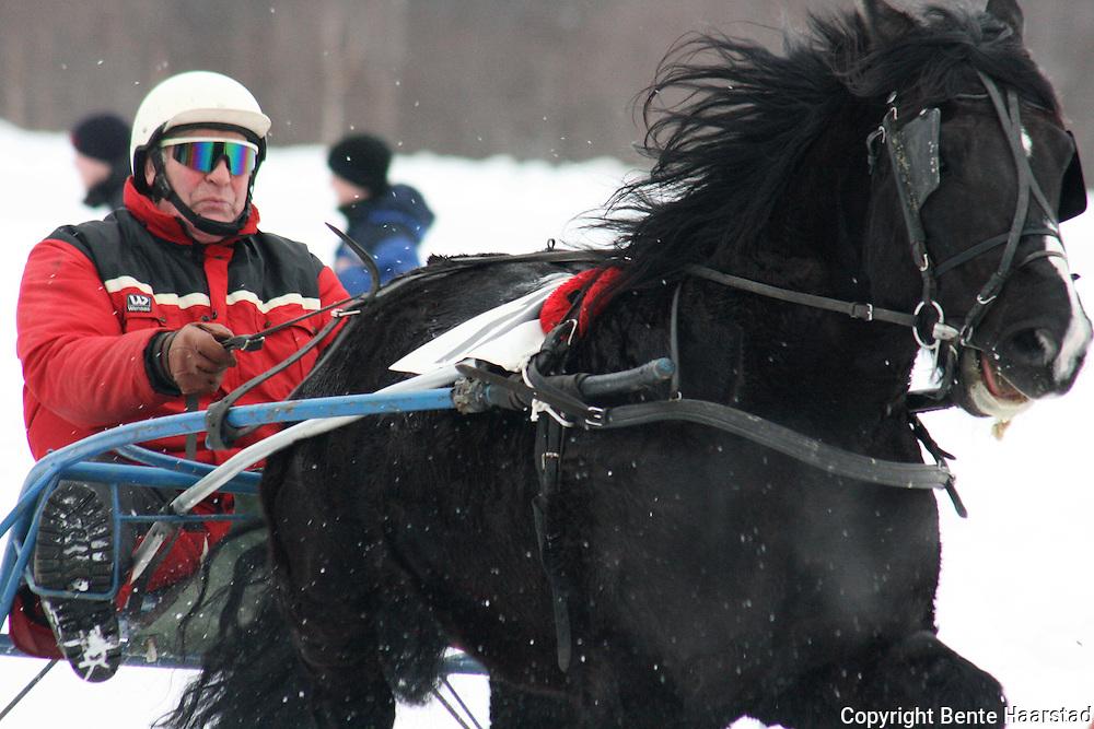 Rallarsvarten var blant hestene som konkurrerte om Selbuhuspokalen på travløpet i Selbu. Foto: Bente Haarstad.