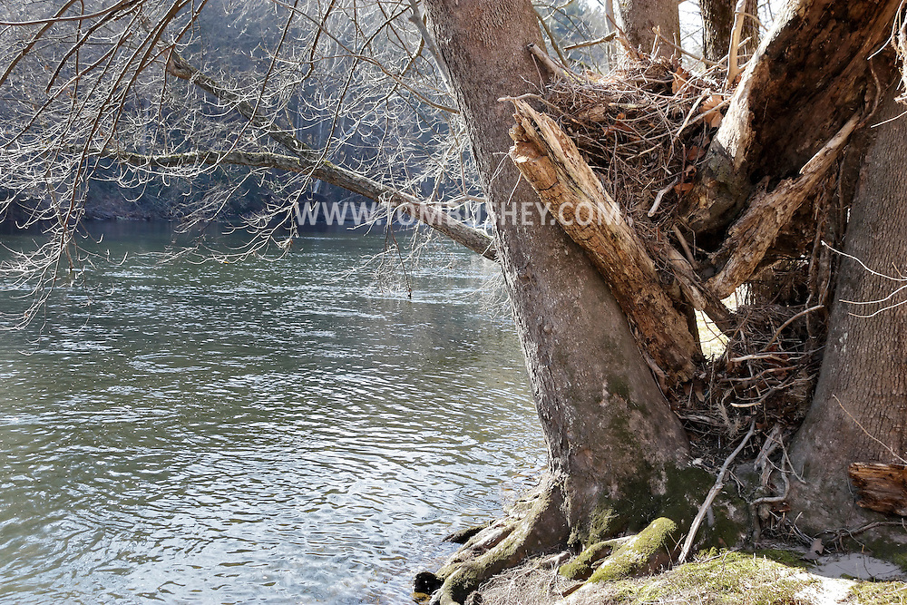 Godeffroy, New York  - Debris from flooding was trapped by tree trunks on the shore of the Neversink River in the Neversink Preserve of the Nature Conservancy on  March 7, 2012.
