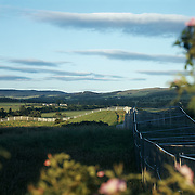 The perimeter fence cutting through the land scape ..The Gleneagles Hotel, hosting the G8 summit was surrounded by fencing min a km from the Hotel.
