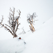 Tyler Hatcher skis some inbounds powder during a severe winter storm near Jackson Hole Mountain Resort, Teton Village, Wyoming.