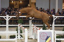 025 - Mojito Van Overis<br /> Hengstenkeuring BWP - Azelhof - Koningshooikt 2015<br /> ©  Dirk Caremans
