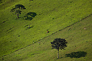 Jeceaba_MG, Brasil...Arvore na paisagem rural de Jeceaba...The tree in the rural landscape in Jeceba...Foto: JOAO MARCOS ROSA /  NITRO