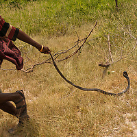Barabaig man with spitting cobra. Barabaig Tanzania