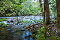 Jacks River, Cohutta Wilderness, Chattahoochee National Forest