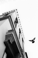 Untitled (Building & Pigeon), 2001. San Francisco, California. ©Ciro Coelho.
