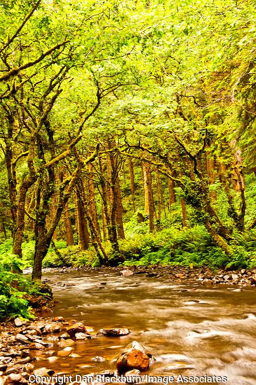 Rock Creek Flows Through Siuslaw National Forest Near the Oregon Coast