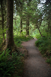Hiking trails through the Lake Quinault Rain Forest near Olympic National Park, Washington, United States of America