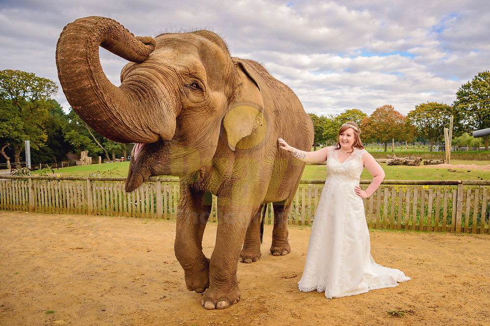 An Elephant Encounter for this lucky bride on her wedding day at Woburn Safari Park