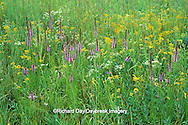 63863-01107 Prairie with Prairie Blazing Star, Little Bluestem grass, Goldenrod, & False Sunflower, Marion Co.   IL