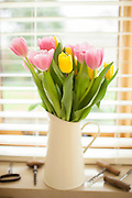Jug of tulips, Tulipa, on window cill in a country kitchen in springtime in Swinbrook in the Cotswolds, Oxfordshire, UK