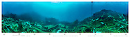 Underwater 360 degree panorama at buoy no. 2 Rena debris field 2014. Astrolabe reef. New Zealand