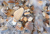 Shell hash along the Cape Hatteras National Seashore in Hatteras, North Carolina.  Shell hash is the ground up mixture of shell fragments that often gathers together in the intertidal surf zone along the beach.
