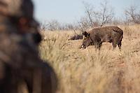 HUNTER WITH A REMINGTON R-15 AIMING AT A WILD PIG REALTREE AP CAMO