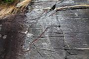 6000 år gamle helleristninger, Stykket i Stadsbygda, Rissa på Fosen i Sør-Trøndelag. Helleristningsfeltet består av ristninger av elg. Fem store elgfigurer er risset inn i bergveggen, sannsynligvis i begynnelsen av yngre steinalder (år 4 000 - 2 000 f.Kr.) Elg er et vanlig motiv på ristninger fra steinalderen, både i hele Norge og østover i Russland. De fleste helleristningsfeltene med steinaldermotiv i indre Trondheimsfjord ligger mellom 20 og 50 meter over havet, og lå antakelig  ved stranden eller nær stranden og var synlige fra sjøveien den gang de ble laget. Ved helleristningene er det plakater med informasjon. NRK: Det vi best kjenner til av helleristninger, er stiliserte framstillinger av båter, dyr og mennesker. Det er slike det finnes mest av, men mange av de aller første menneskene som begynte å risse inn i berget, tegnet naturalistisk. De tegnet dyr som var mest mulig lik de levende modellene. Slike naturalistiske helleristninger finnes det svært få av i Norge, men rundt Trondheimsfjorden ligger det fire slike felt, skriver Gemini.no. Dette var trolig de aller første helleristningene som ble laget i området. Det skjedde i en tid da grupper av fangstfolk trakk innover i landet fra kysten. – Dette var folk som sesongvis dro fra boplass til boplass, sier Kalle Sognnes, professor emeritus ved NTNU til Gemini.no. <br /> Helleristningene markerer at landskapet omkring Trondheimsfjorden for alvor ble tatt i bruk. De viser at steinaldermennesket begynte å se på landskapet på en ny måte enn tidligere. – Det er dette landskapet som noen tusen år seinere framstår som trøndernes landskap, sier Sognnes. Ett av de fire feltene skiller seg ut. Det ligger ved gården Stykket på Stadsbygd på Fosen. – Ristningene på Stykket er enestående. Den dominerende figuren består av et stort hode og halsen til en elg i full størrelse. Nakken er bøyd slik at hodet vender nedover. Resten av dyret mangler. Det har antakelig aldri vært tegnet ferdig, sie