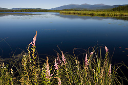 Big Cherry Pond and the Presidential Range in Jefferson, New Hampshire.  Pondicherry National Wildlife Refuge.  White Mountains.  Summer.
