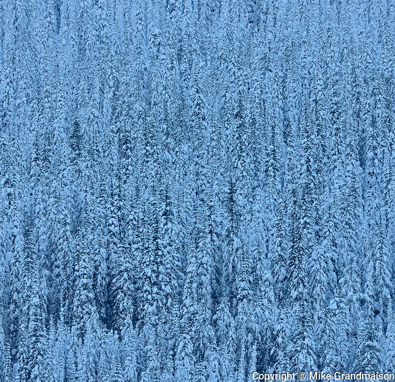 Montane forest on hillside covered in snow, Kootenay National Park, British Columbia, Canada