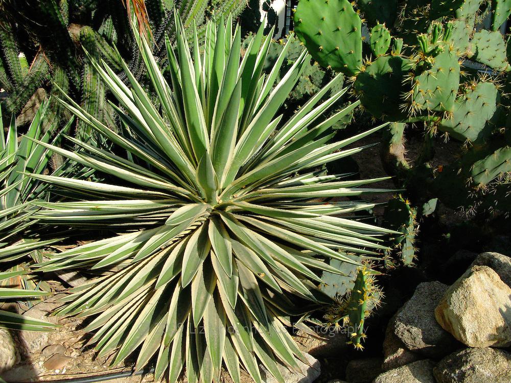 Cacti garden in Aruba