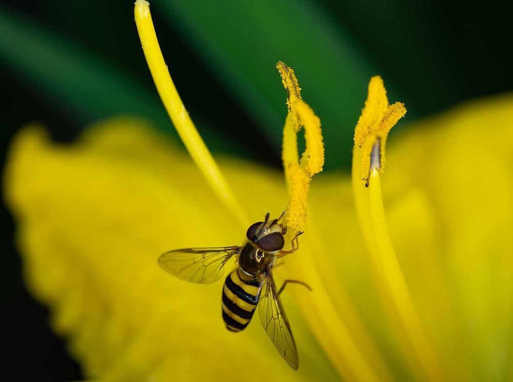Bugs up close
