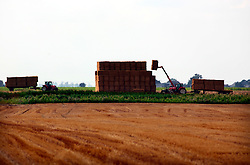 UK ENGLAND NORFOLK LAKESEND 7AUG06 - Tractors stack up bales of straw on agricultural land on the Norfolk and Cambridgeshire border...jre/Photo by Jiri Rezac..© Jiri Rezac 2006..Contact: +44 (0) 7050 110 417.Mobile:  +44 (0) 7801 337 683.Office:  +44 (0) 20 8968 9635..Email:   jiri@jirirezac.com.Web:    www.jirirezac.com..© All images Jiri Rezac 2006 - All rights reserved.