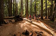 Ross Creek Cedars Scenic Area, Montana, Western Red Cedars, tourists, dogs, hike