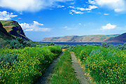 Image of an off-road trail overlooking the Columbia River and Wallula Gap in Wallula, eastern Washington, Pacific Northwest